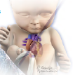 fetal-blog-pic-1